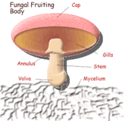 پاورپوینت طرح پرورش قارچ خوراكی